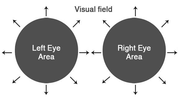 Eye visual field